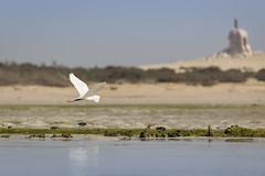 070A2598 (Cog2012) Tags: qatar