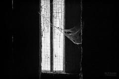 cobweb (ale_brando) Tags: spiderweb cobweb window cellar monochrome mono light shade twilight d700 silverefexpro niksoftware daylight nikonfx fx winter
