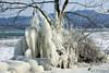 Draperies de glace (jean-daniel david) Tags: nature glace lac lacdeneuchâtel hiver gel arbre réservenaturelle yverdonlesbains suisse suisseromande switzerland ciel
