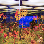Biosystem Reflections thumbnail