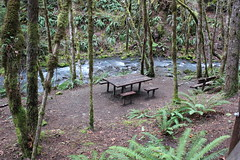 Susan Creek plays the part of affable host to picnickers (rozoneill) Tags: north umpqua trail river swiftwater park bobs creek butte deadline falls oregon hiking national recreation forest idleyld roseburg glide