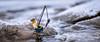 #WhereIsAnton (Reiterlied) Tags: 1835mm angle anton d500 dslr fisherman fishing lego legography lens minifig minifigure nikon oulu ouluriver oulujoki photography reiterlied river sigma stuckinplastic toy wide