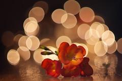 The light of freesia (Baubec Izzet) Tags: baubecizzet pentax bokeh flower freesia