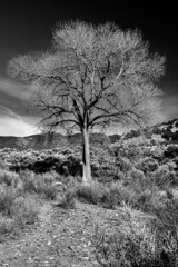 2017 Tree In Monochrome (DrLensCap) Tags: tree in monochrome us highway 68 south taos new mexico nm bw black white and robert kramer