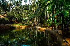 _02A0666 (cursty1) Tags: goa india asia plantation nature naturephotography landscape landscapephotography travel travelphotography wanderlust canon canonphotography jungle