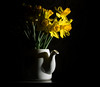 Bringing The Spring Home! (Rob Pitt) Tags: off camera flash canon 750d yongnuo daffodils tea pot 50mm yellow