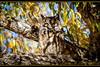 Hiding in Plain Sight (ctofcsco) Tags: 11000 20x 2x 7d 7dclassic 7dmark1 7dmarki 800mm canon colorado didnotfire digital ef2x ef2xii ef400mmf28liiusm20x eos eos7d esplora explore explored extender f56 flashoff iso125 photo pic pretty renown shutterspeedpriorityae spot supertelephoto teleconverter telephoto unitedstates usa 2018 alamosa birds cranes geo:lat=3745997671 geo:lon=10614014486 geotagged image landscape migration montevista montevistanwr nationalwildliferefuge nature northamerica photograph picture sanluisvalley sandhillcrane sandhillcranefestival spring wildlife wwwmvcranefestorg zinzer forest animal tree