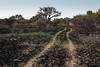 Querétaro -3263180303 (Jacobo Zanella) Tags: queretaro mexico 2018 sendero camino senda path line hidden mysterious rural land rough jacobozanella jz76