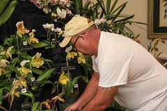 2018 JOS Show-0212 (tbottom) Tags: jos jacksonvilleorchidsociety jimroberts macrivenbark macsorchids staugustineorchidsociety suebottom floridasuncoastorchids thanhnguyen artrussell terrybottom orchids orchidsociety orchidshow orchidpictures cattleyas dendrobium oncidiums phalaenopsis