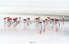 Peaceful....!!! (Nita_Fotos) Tags: sun sundown clouds orange sol atardecer nubes naranja cielo reflection reflejos agua aves birds flamingos lagoon water animales lecheria venezuela tuniñasalvajedelaselva