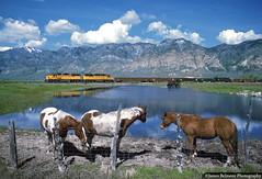Life on Watery Lane (jamesbelmont) Tags: local brighamcity emd gp392 maladlocal horse lake puddle wasatch railroad railway train