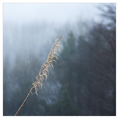Grass and Mist (Father Pie) Tags: lensbaby blur edge50 elland