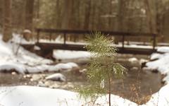 Escaping the Chill (Radical Retinoscopy) Tags: coloneldenning statepark pennsylvaniastateparks pa pine tree bokeh minoltasrt101 minolta rokkor58mmf12 rokkor minoltarokkor snow winter stream fujichrome velvia100f velvia nikoncoolscanv transparency slide