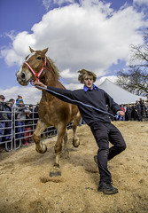 Amish Horse Auction (crabsandbeer (Kevin Moore)) Tags: winter amish animals auction children farm hats horses kids livestock mennonite mud mudsale people rural spring sky action candid street portrait boy man