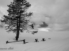 Buried #happyfencefriday (maureen.elliott) Tags: happyfencefriday hff snow winter landscape fence buried tree blackandwhite yellowstonenationalpark haydenvalley nature clouds isolated wyoming