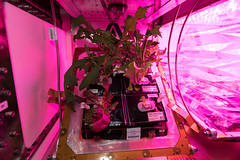 Veggies in Space! (NASA's Marshall Space Flight Center) Tags: nasa nasamarshall iss internationalspacestation space veggies gardening lettuce plants vegetables botany greenthumb