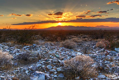 Mojave National Preserve (morbidtibor) Tags: usa california desert mojave sunset