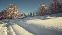 Snow, flowery light (alessmile ♥) Tags: piandelfrais piemonte snow nevefresca