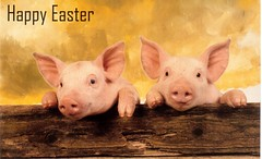 Postcrossing US-5212833 (booboo_babies) Tags: pigs hogs easter postcrossing