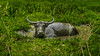 Spa session (Csaba Desvari) Tags: green field laguna nature land air