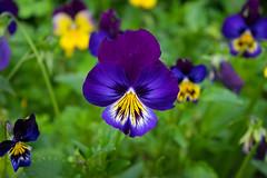 untitledc7profcampo_20170422_120.jpg (nesmanrique) Tags: abril bogota clasesiete 2017 jardinbotanico nikond5300 profundidaddecampo sietefotografos