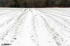 Snow on the big field Stoke Poges Bucks (Photo 10 KH) Tags: photo10kh photography10kh 10000 hours deliberate dedicated practice learning art photography mastery masteringphotography landscapephotography