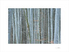 Resilience (E. Pardo) Tags: árboles trees bäume formas formen forms resilience bosque wald forest troncos woods baumstämme