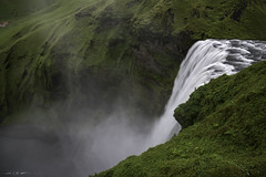 Given to Fly (courtney_meier) Tags: iceland landscape skógafoss skógáriver birds fulmars longexposure mist nesting sheep spray water waterfall wildflowers southernregion