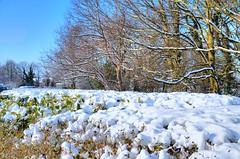 Snow - March 2018