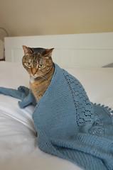 Uraidla Shawl (osiristhe) Tags: cat dizzy knitting yarn