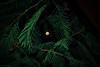 Moonlight (Ruan Richard Photography) Tags: hill moon moonlight awesome amazing nikon nature green heeybooy ruanrichardphotography rrphotography photography focus natural sky star brazil cool color perfect night visualscreatives flickraward
