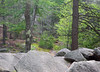 Trees and Ancient Boulders (RockN) Tags: boulders glacier july2017 purgatorychasm statepark sutton massachusetts newengland