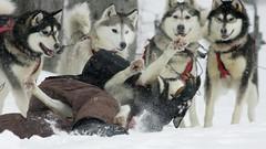 Vincent et Acadie (francis.bordeleaumartin) Tags: sled traineau team équipe chien hiver winter neige snow