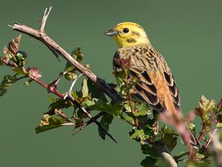 Birthday bird - Geburtstagsvogel (for and by Joe :-)