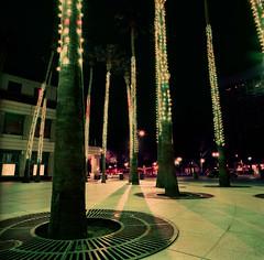 Circle of Palms Plaza (bior) Tags: sanjose downtownsanjose longexposure night downtown hasselblad500cm distagon lomochromepurple lomography purple lomopurple mediumformat 120 6x6cm circleofpalmsplaza palmtree