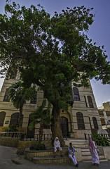 Seeking shade (timfeld1) Tags: jeddah unesco world heritage centre tree shade old house culture blue sky saudiarabia
