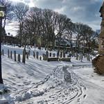 snowy Alderney thumbnail