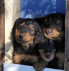 Trois frères (hans pohl) Tags: france var brignoles animaux animals dogs chiens nature