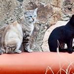 #gatos #gatoscallejeros #cats #photocats #instacats #neko #meow #gatze #gatto #koshka #catsofworld #catsofinstagram #streetcats #catsofworld #siames #siamestabbypoint #tabbypoint #blackcat #gatonegro thumbnail
