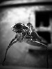 2:32 am (Eera Photography) Tags: nightmare night dreams fear dark paralleluniverse scary weird creepy spooky dragonflynymph skin dragonflylarva insects critters