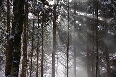 Snow Sunlight