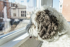 Visiones (ninestad) Tags: reflejos madrid calle street window dog buildings city pet