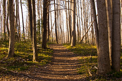 Sunny Trail (dzmears) Tags: park trees sunny sun landscape winter peaceful woods hiking trail day pretty leaves 35mm green forest
