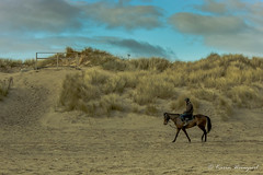 Lonesome Rider (KarinWeinzierl) Tags: horseriding horse rider beach outdoors landscape sand seaside