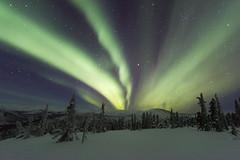 Aurora Borealis (girltwin) Tags: chenahotspringsfairbanks northernlights aurora auroraborealis chenahotsprings alaska usa neige winter green beams beam me up