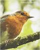 Robin 309C (henharr1er) Tags: 2016 d750 florafauna lake may nikon70200f28 robin sps woodsmill