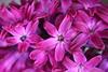 IMG_6915 (Usagi93190) Tags: macro flower biltmore estates greenhouse gardens ashville north carolina