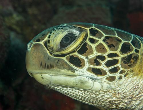 turtle profile