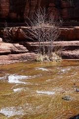 10-goldgreen streambed (anne.kane) Tags: sliderockstatepark redrock sedona arizona
