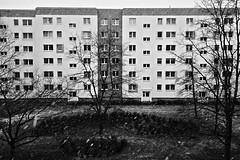 Berlin, Barther Straße (tom-schulz) Tags: x100f rawtherapee monochrom bw sw urban berlin thomasschulz haus baum schnee fenster